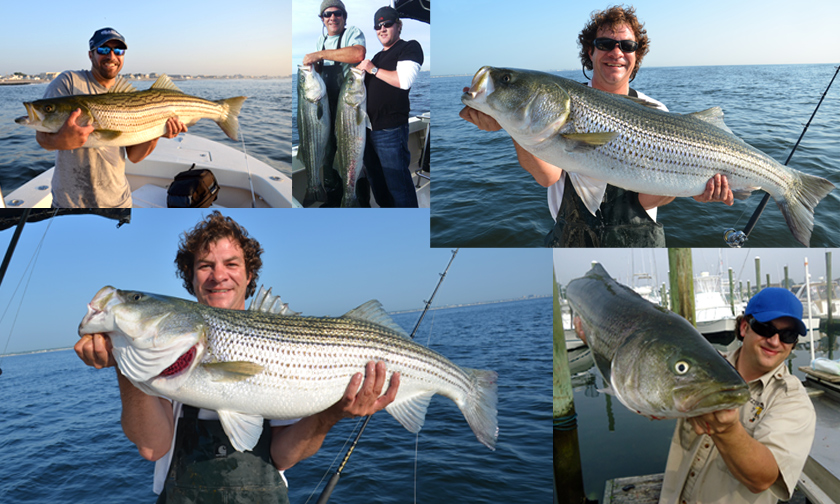 Atlantic Ocean Striper